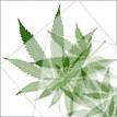cannabisleaf11t.png